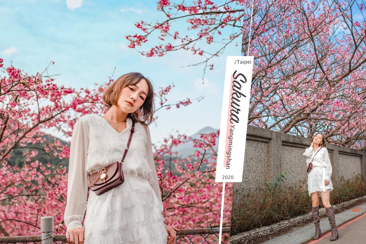 平菁街櫻花2020|台北粉紅櫻花海。陽明山交通IG拍照懶人包
