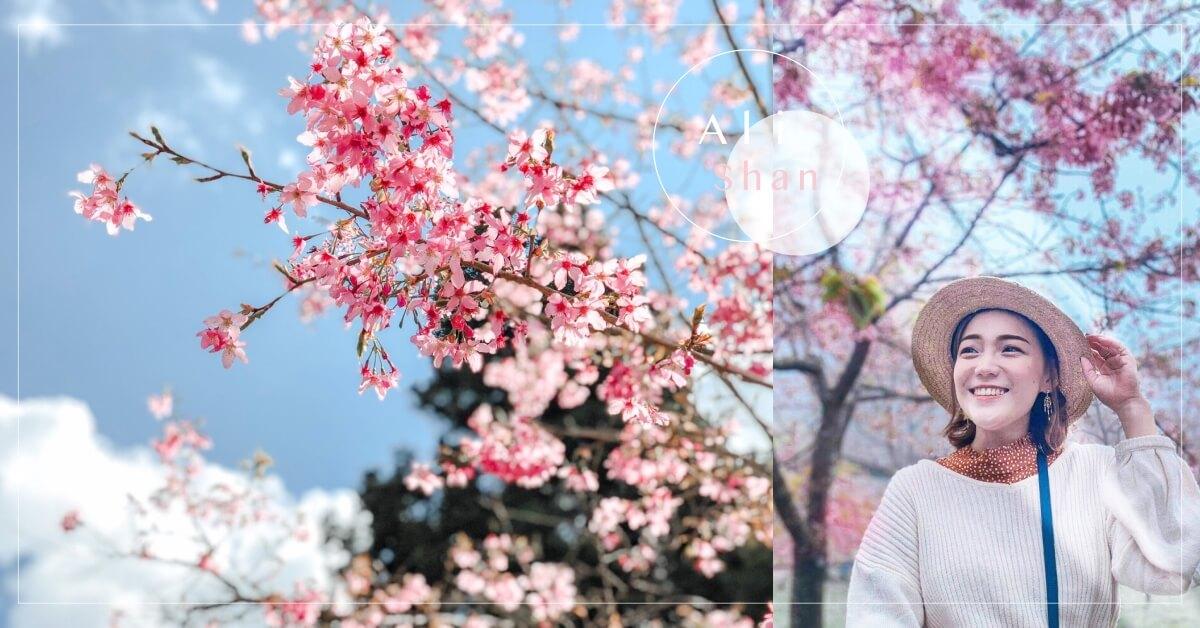 阿里山櫻花季2020|