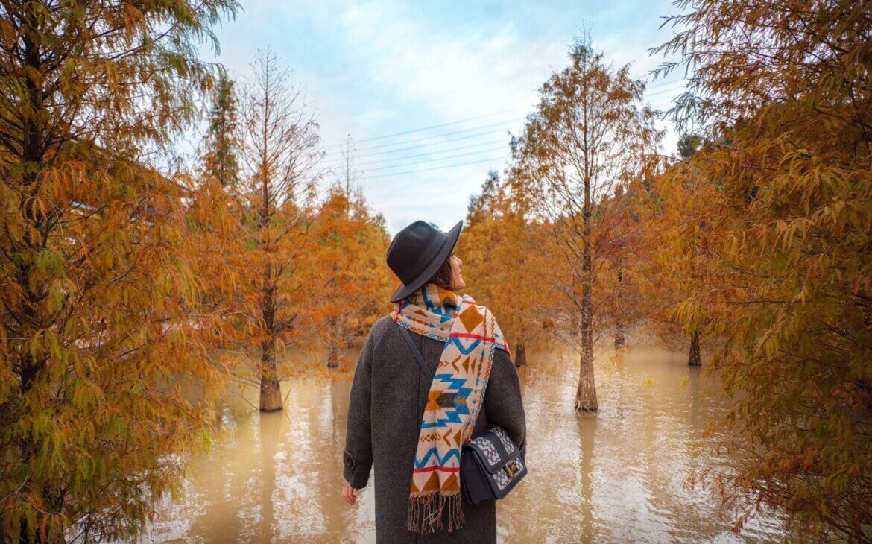 落羽松秘境|夢幻湖水倒映橙黃樹影