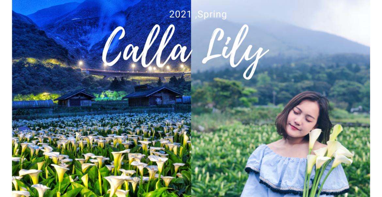竹子湖怎麼去?陽明山海芋季2021 盤點5家夢幻海芋田,漫步浪漫海芋步道