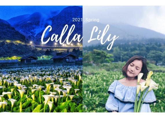 竹子湖怎麼去?陽明山海芋季2021|盤點5家夢幻海芋田,漫步浪漫海芋步道