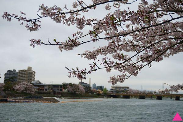 GS愛日本| 大阪。宇治。奈良 | 櫻花最前線 私藏賞櫻景點特搜(上)