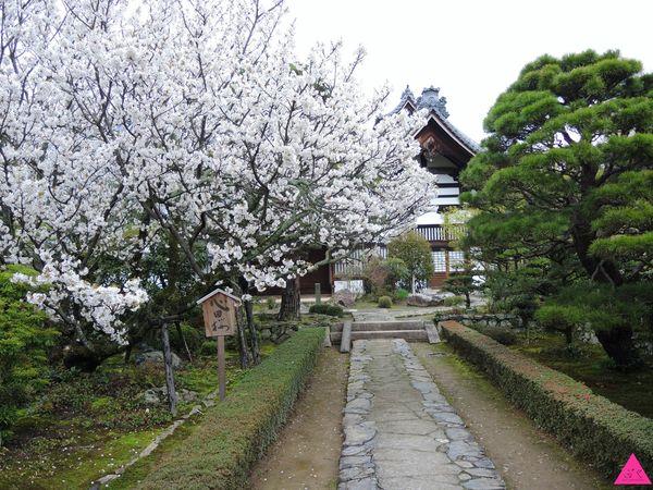 GS愛日本| 京都 | 梅小路公園 高瀨川 清水寺 平野神社 |櫻花最前線 私藏賞櫻景點特搜(下)